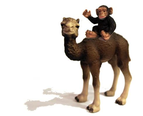ラクダとチンパンジー